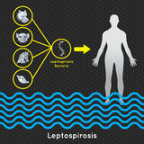 Modello di vettore di leptospirosi, simbolo medico di leptospirosi Immagini Stock