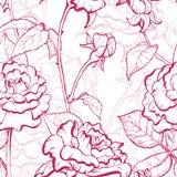 Modello disegnato a mano dell'illustrazione di Rosa Immagine Stock
