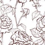 Modello disegnato a mano dell'illustrazione di Rosa Fotografia Stock
