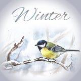 Modello disegnato a mano della carta dell'uccello dell'acquerello Fotografie Stock Libere da Diritti