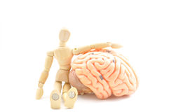 Modello e cervello umani di legno del modello umano immagini stock