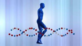 Modello e DNA umani royalty illustrazione gratis