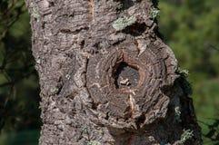 Modello e struttura sui tronchi di albero fotografia stock