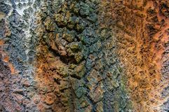 Modello e struttura sui tronchi di albero immagine stock