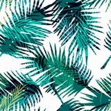 Modello esotico senza cuciture con le foglie di palma tropicali Fotografia Stock
