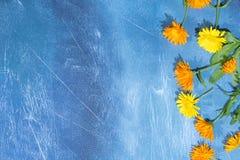 Modello floreale dei fiori della calendula su fondo blu Priorità bassa floreale immagine stock libera da diritti