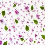 Modello floreale dei fiori e delle foglie lilla freschi su bianco fotografia stock libera da diritti