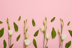 Modello floreale del lisianthus bianco con copyspace immagine stock libera da diritti