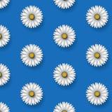 Modello floreale della margherita senza cuciture su un fondo blu Illustrazione floreale di vettore illustrazione di stock