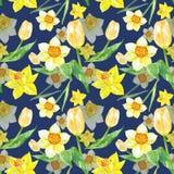 Modello floreale della molla dell'acquerello nei colori di giallo con i fiori dei tulipani e del narciso su fondo blu illustrazione vettoriale