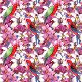 Modello floreale esotico - ripeti meccanicamente l'uccello, fiori di fioritura dell'orchidea Fotografia Stock Libera da Diritti