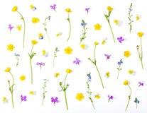 Modello floreale fatto dei fiori del prato isolati su fondo bianco Disposizione piana fotografia stock