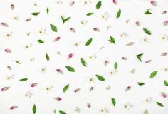Modello floreale fatto dei fiori della molla, dei germogli rosa e delle foglie isolati su fondo bianco Disposizione piana fotografia stock libera da diritti