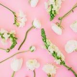 Modello floreale fatto del ranunculus, della bocca di leone e del tulipano bianchi su fondo rosa Disposizione piana, vista superi Fotografie Stock