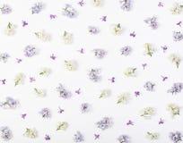 Modello floreale fatto della molla bianca e dei fiori lilla viola isolati su fondo bianco Disposizione piana immagini stock