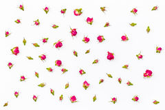 Modello floreale fatto delle rose asciutte rosa su fondo bianco Disposizione piana, vista superiore Immagine Stock
