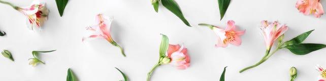 Modello floreale fatto di alstroemeria rosa, foglie, petalo di disposizione piana Fotografia Stock