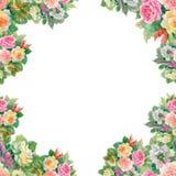 Modello floreale senza cuciture con delle rose rosse ed arancio Fotografia Stock Libera da Diritti
