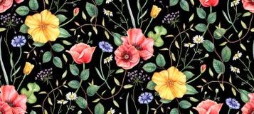 Modello floreale senza cuciture con i wildflowers su fondo nero Illustrazione disegnata a mano dell'acquerello royalty illustrazione gratis