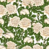Modello floreale senza cuciture con le rose, tiraggio della mano Fotografie Stock