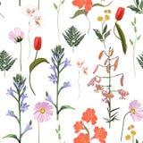 Modello floreale senza cuciture su un fondo bianco Fiori ed erba della primavera illustrazione di stock