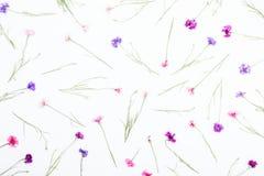 Modello floreale su fondo bianco, vista superiore fotografia stock