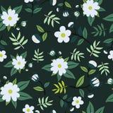 Modello floreale sveglio nel piccolo fiore Fondo senza cuciture di bianco di vettore Illustrazione di Stock