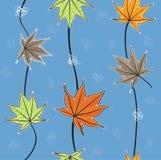 Modello/foglie di acero delle foglie di autunno Immagini Stock