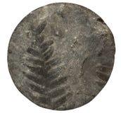 Modello fossile della felce della pianta su superficie di pietra, il centro del trapano Front View fotografia stock libera da diritti