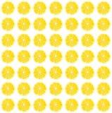 Modello fotografico del limone giallo fresco Fotografie Stock Libere da Diritti