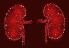 Modello geometrico interno degli uomini 3d dell'organo dei reni poli in basso illustrazione vettoriale