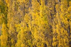 Modello giallo della natura Immagini Stock