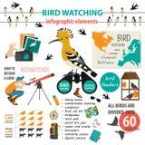 Modello infographic di bird-watching Immagine Stock