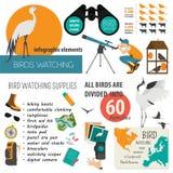 Modello infographic di bird-watching Fotografie Stock Libere da Diritti