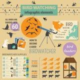 Modello infographic di bird-watching Immagini Stock