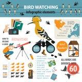Modello infographic di bird-watching Fotografia Stock