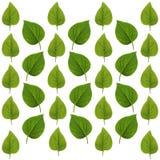 Modello lilla verde della foglia Immagine Stock