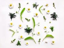Modello luminoso variopinto delle erbe e dei fiori del prato su fondo bianco Foto piana di disposizione Fotografie Stock Libere da Diritti