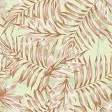 Modello marrone delle foglie di palma Fotografie Stock Libere da Diritti