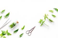 Modello medicinale dell'erba del raccolto Foglie, bottiglie e sciccors sul copyspace bianco di vista superiore del fondo Fotografie Stock