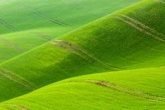Modello minimalistic astratto del fondo della natura Rolling Hills dei giacimenti di grano verdi La Moravia del sud, repubblica C fotografia stock