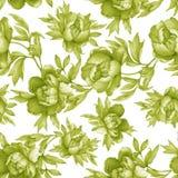Modello monocromatico della pianta senza cuciture floreale d'annata con le peonie di fioritura, su fondo bianco Acquerello IL di  Fotografia Stock