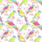 Modello multicolore degli uccelli Fotografia Stock