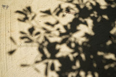 Modello naturale astratto molle di grande ombra dell'albero sulla strada marrone chiaro della superficie della sabbia della terra Fotografia Stock Libera da Diritti