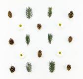 Modello naturale creativo delle piante di inverno su fondo bianco Disposizione piana, vista superiore Immagine Stock Libera da Diritti