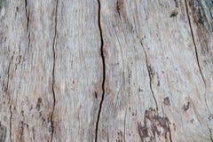Modello o struttura di legno della corteccia della natura Fondo astratto di legno naturale di vecchio marrone approssimativo dell Fotografia Stock Libera da Diritti