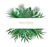 Modello orizzontale dell'insegna decorato con fogliame verde delle piante tropicali di paradiso o foglie di palma esotiche verdi  royalty illustrazione gratis
