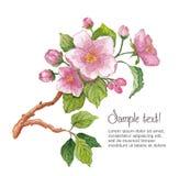 Modello per i fiori di ciliegia dell'acquerello del briciolo della cartolina d'auguri Immagini Stock Libere da Diritti