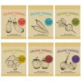 Modello per progettazione dell'etichetta, dipinto con i prodotti di verdure del vegano del carbone, opuscoli, insegna, menu, merc Immagini Stock