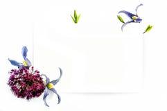 Modello per progettazione dell'invito con il contorno della clematide e dell'inchiostro del fiore fresco Fotografia Stock